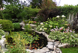 Your water garden can be just like having the cottage in your backyard.